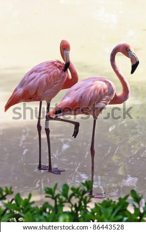 Flamingos in the park as xcaret - Mexico - stock photo