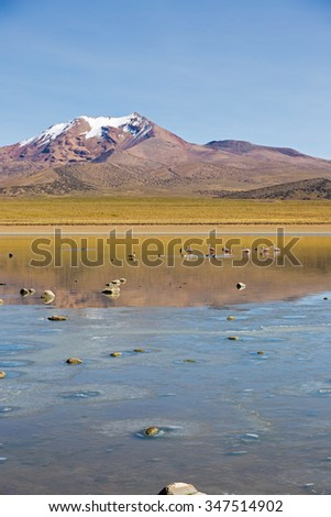 Flamingos on lake Huayñacota with the snowcapped volcano Anallajchi the background. Sajama National Park, on the border between Bolivia and Chile over 4500 meters. Andean Mountains - stock photo