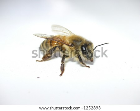Flash bee 3/4-view - stock photo