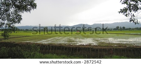 Flat ricefield just after the rain - Myanmar.