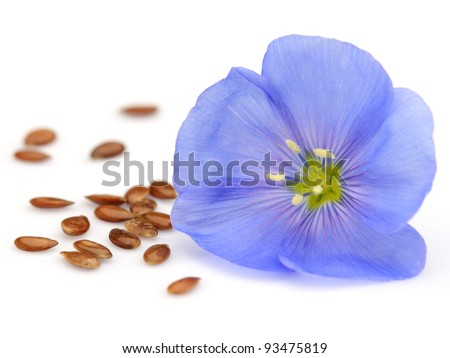 Flax flower - stock photo
