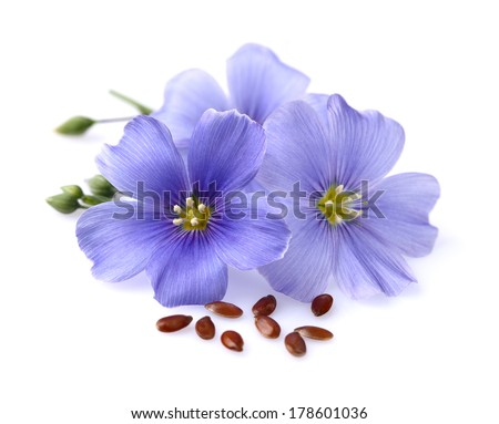 Flax flowers with seeds - stock photo