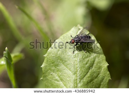 Flesh Fly in big detail on the Grass - stock photo