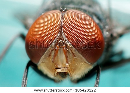 Flies - stock photo