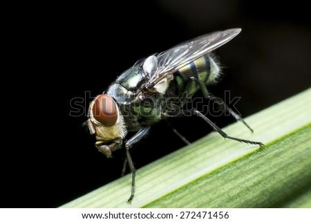 Flies cause diseases - stock photo