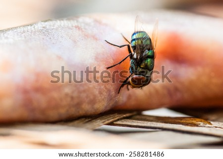 Flies swarm around fish exposed to sunlight. - stock photo