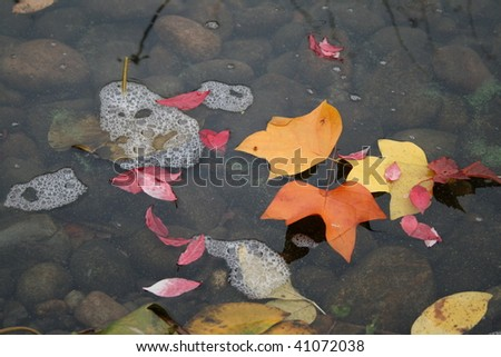 Floating Fall Leaves