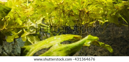 floating on water plants with roots