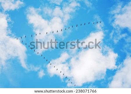 flock of birds flying in formation under a cloudy sky. Shot in Sardinia, Italy - stock photo