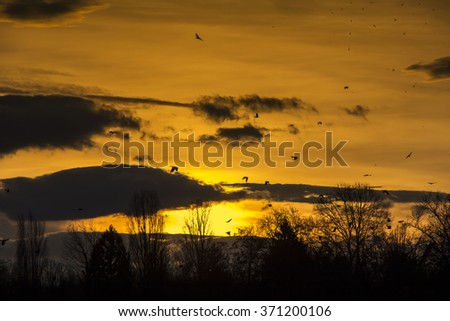 Flock of Birds Flying in the sky Sunset as Background