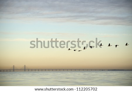 Flock of birds flying near bridge