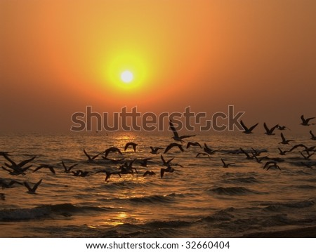 Flock of birds flying over ocean silhouetted with sunset - stock photo