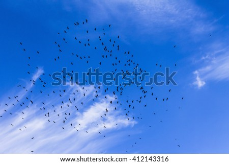 Flock of birds in the sky, clouds, a sunny day