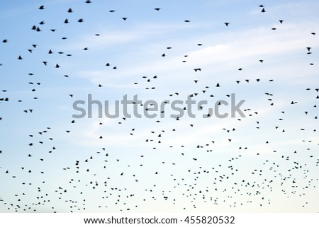 Flock of birds migrating to a different continent