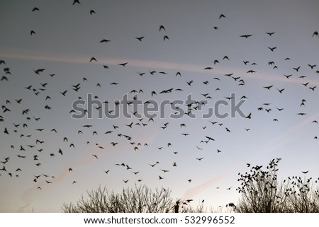 Flock of birds on blue sky over trees