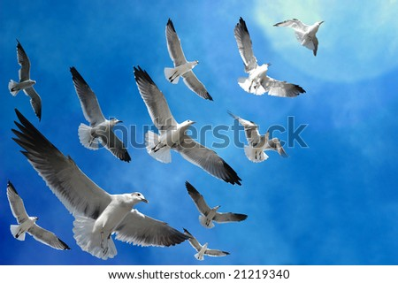 Flock of birds (seagulls) following the light in the sky - stock photo