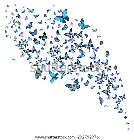 Flock of different blue butterflies, isolated on white background - stock photo