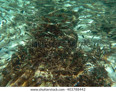 flock of fish on the coral reef - stock photo