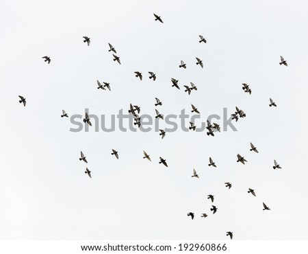 Flock of flying birds in a gray sky - stock photo