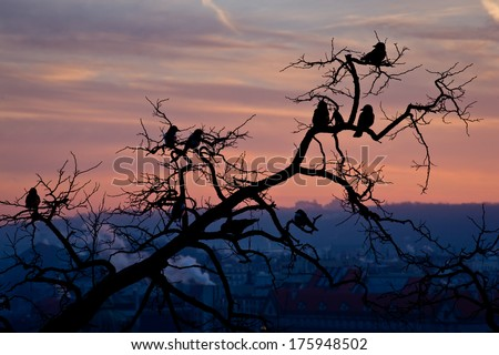 Flock of magpies sitting on a tree during sunrise above the city - stock photo