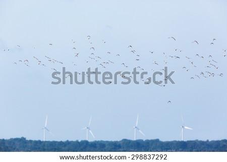 Flock of Mallard ducks with wind power in the horizon - stock photo