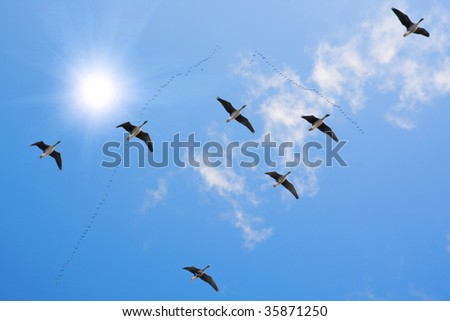 flock of migrating - stock photo