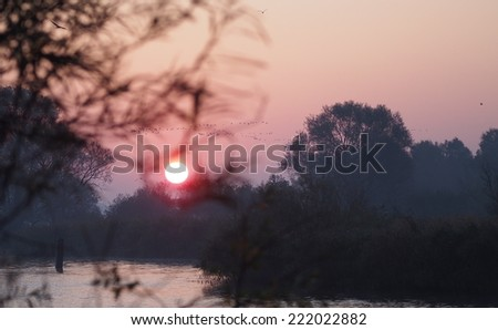 flock of migrating geese flying at sunrise - stock photo