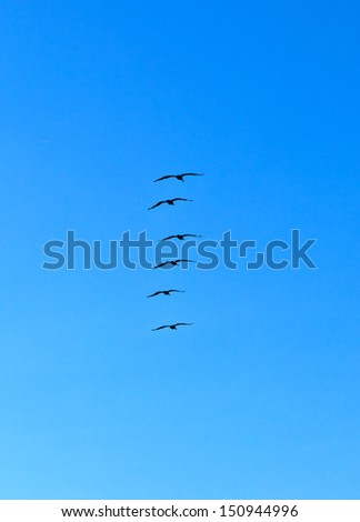 flock of pelicans in the air - stock photo