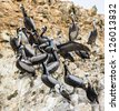 Flock of pelicans over the rocks of the Ballestas Islands, Peru, South America - stock photo