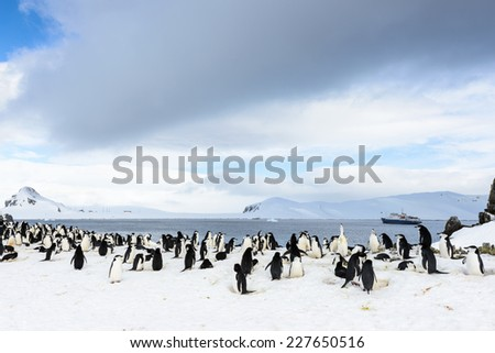 Flock of penguins on the ice in ANtarctica - stock photo