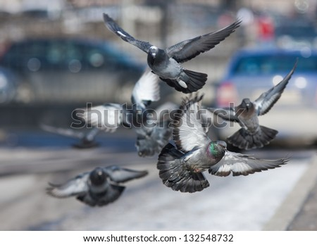 flock of pigeons flying over the street - stock photo