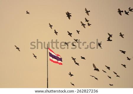 Flock of pigeons on nightfall sky, Thailand flag on flagstaff - stock photo