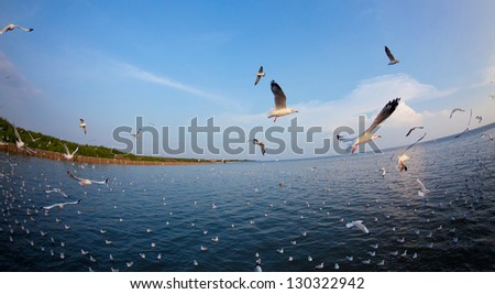 Flock of seagulls fly over sea - stock photo