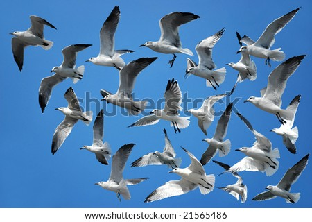 Flock of seagulls flying in the air - stock photo