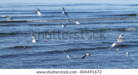 Flock of seagulls flying over sea - stock photo
