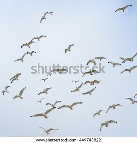 Flock of seagulls in coastal town Seaton, Devon - stock photo