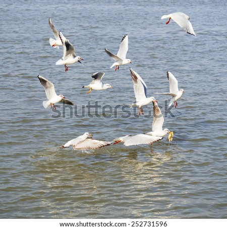 flock of seagulls in fight for food - stock photo