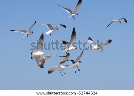 flock of seagulls in the blue sky - stock photo