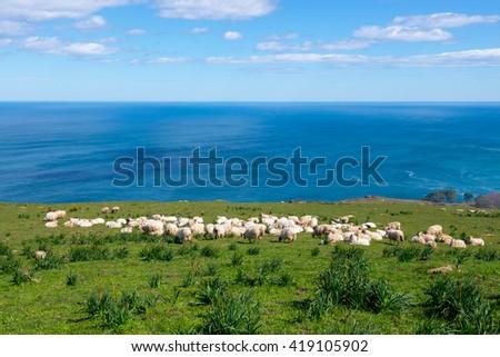 Flock of sheep in Jaizkibel, Guipuzcoa (Spain) - stock photo