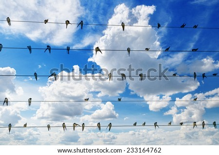 flock of swallows on blue sky background - stock photo