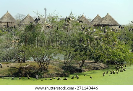 Flock pelicans and marabou sitting on the trees at the zoo - stock photo