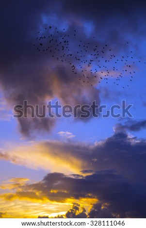 flocks of starlings flying into a bright orange sunset sky in the wild atlantic way - stock photo