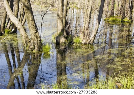 flooded forest at springtime - stock photo