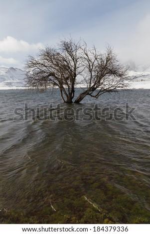Flooded in winter Tree in snowy mountain landscape marsh  - stock photo