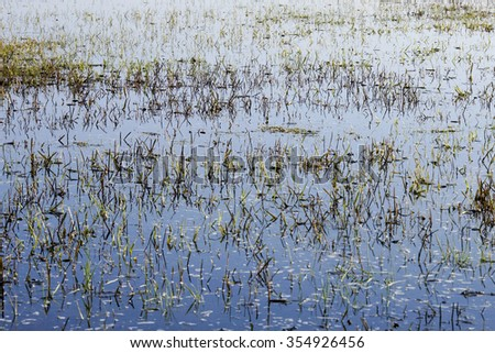 Flooded land in the Netherlands - stock photo