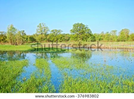 Flooded meadow, oak tree and blue sky - stock photo