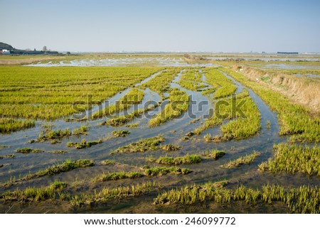 Flooded rice field in Abufera Natural Park, Valencia, Spain - stock photo