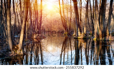 Flooded tree in forest at spring time - stock photo