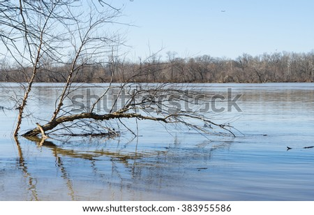 Flooded tree in the middle of Potomac river. - stock photo