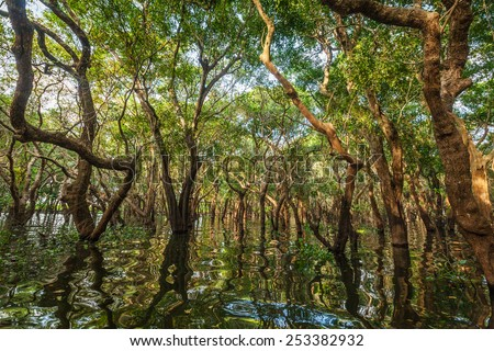 Flooded trees in mangrove rain forest. Kampong Phluk village. Cambodia - stock photo